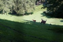 The valley of the deer, Wildpark Schwarze Berge