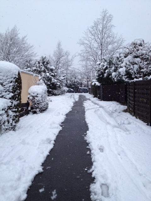 Snow-covered pathway