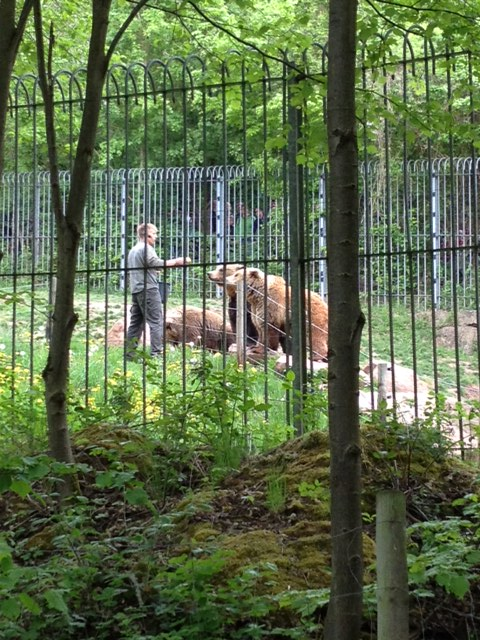 Feeding the brown bears